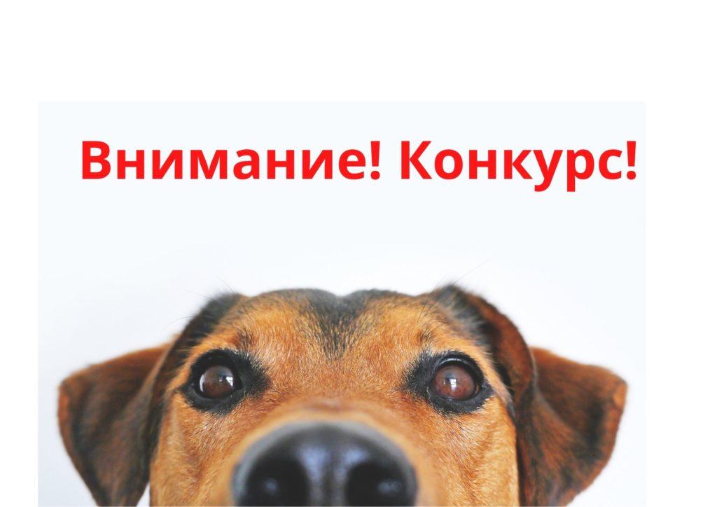 Конкурс к Международному дню собак 0+